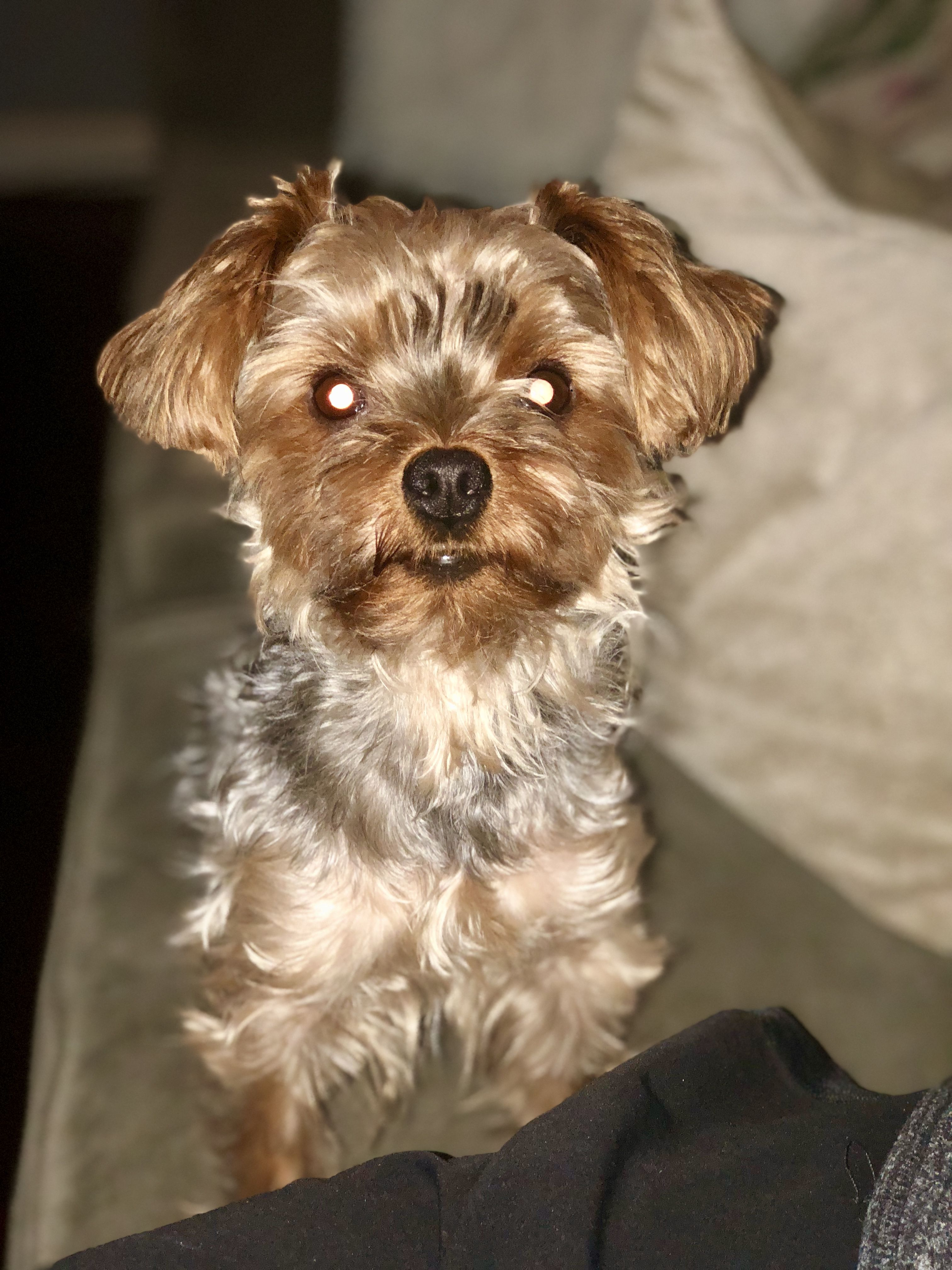 Hello With Images Yorkie Pets Dogs