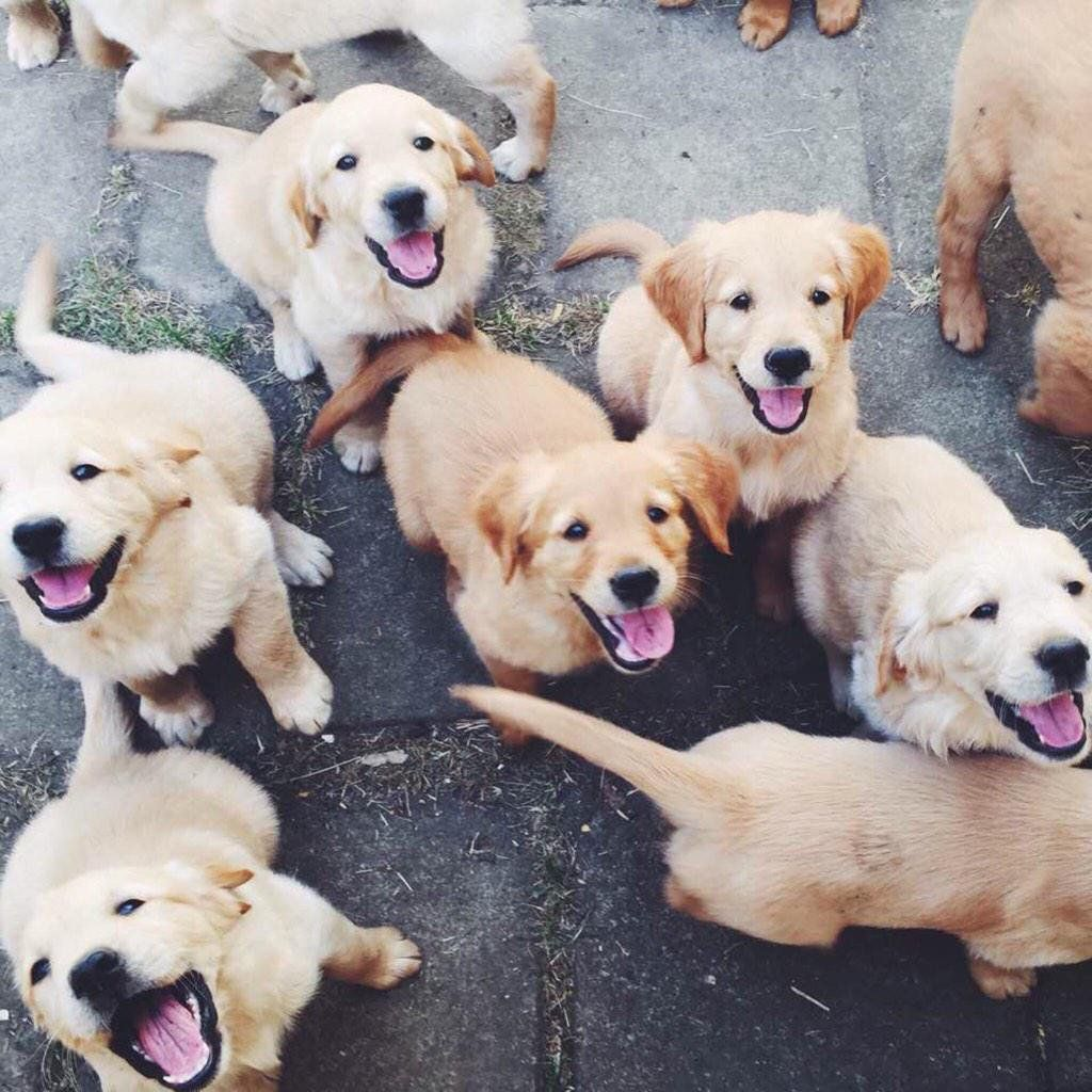 happy pups wild at heart Pinterest Pup, Animal and Dog