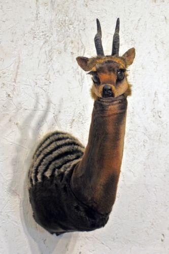 Sculpture-Wildlife-Gerald Heffernon: Iks-iks
