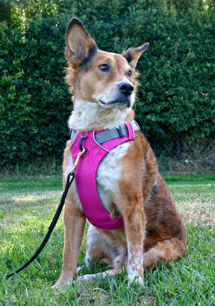 The Dog Geek: Product Review: Ruff Front Range Harness | Dog ...