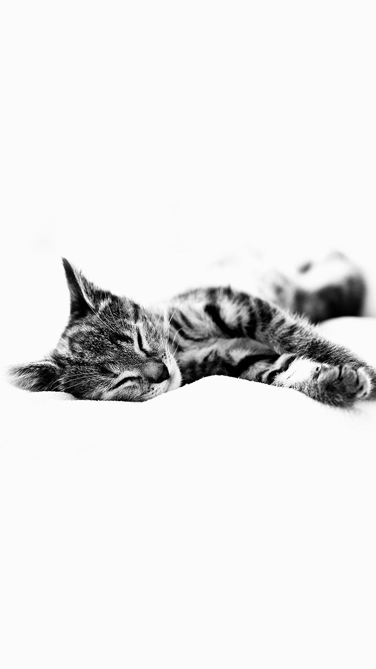 Kitten iphone wallpaper tumblr - Get Wallpaper Http Iphone6papers Com Ms25 Sleepy Cat