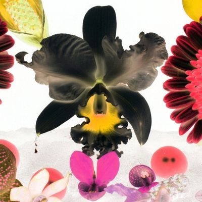 In the Night garden: Hale-Bopp (Pigment Print Signed Limited Edition of 20) by Marc Quinn