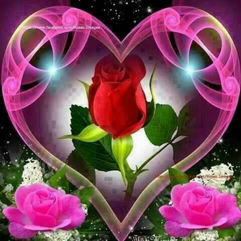 Corazon Cosas De Amor Saludo De Amor Rosas Bonitas