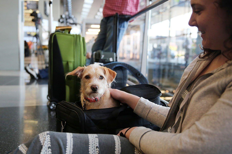 Viajar com animais para Europa veja o passo a passo