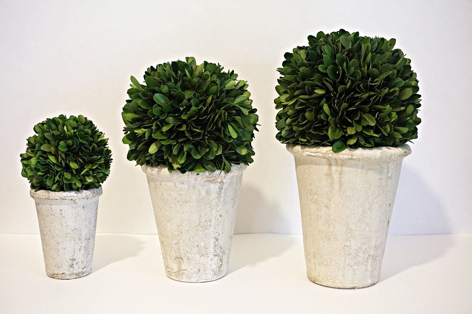 Preserved Boxwood Ball in Pot Set (4', 5'