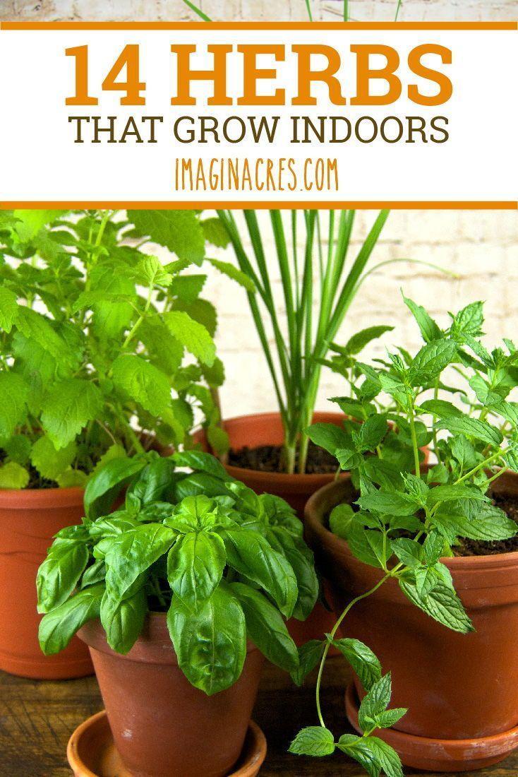 14 Herbes culinaires pour votre intérieur Herb Garden