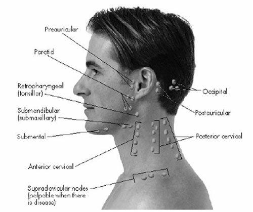 Occipital lymph nodes