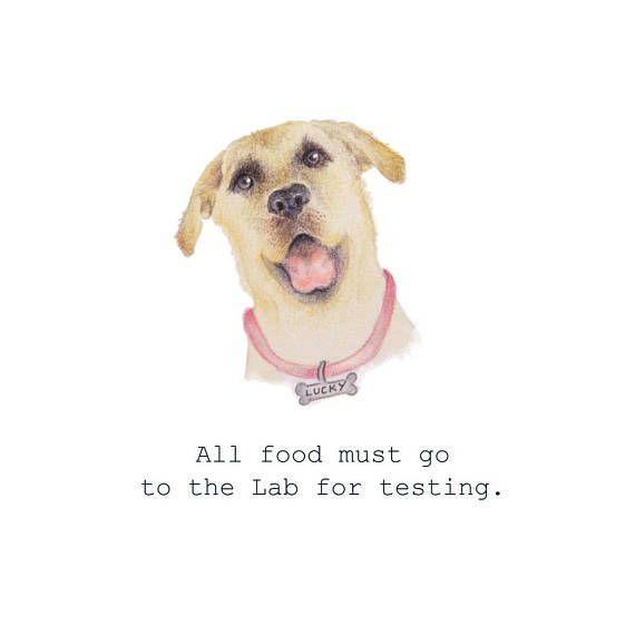 Funny Labrador Birthday Card Yellow Labrador Card Funny Dog Card