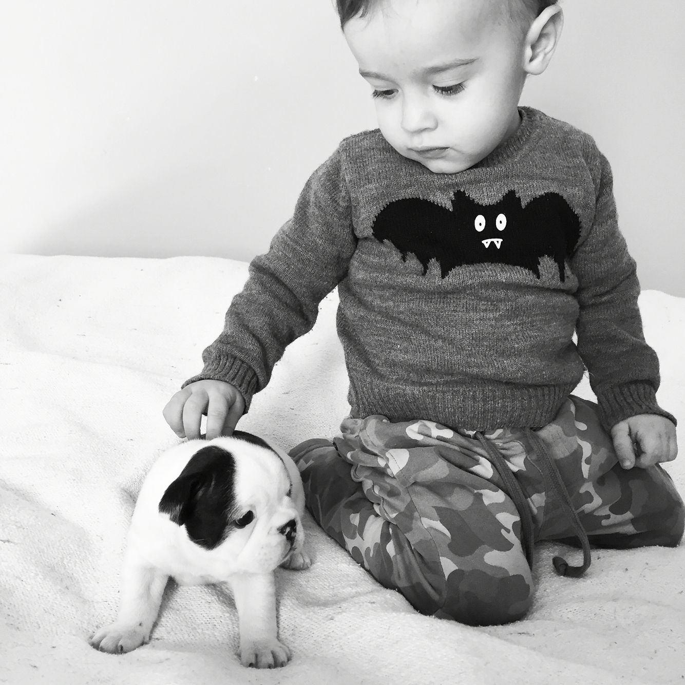 French Bulldog Mix Puppies For Sale Ontario Ideas