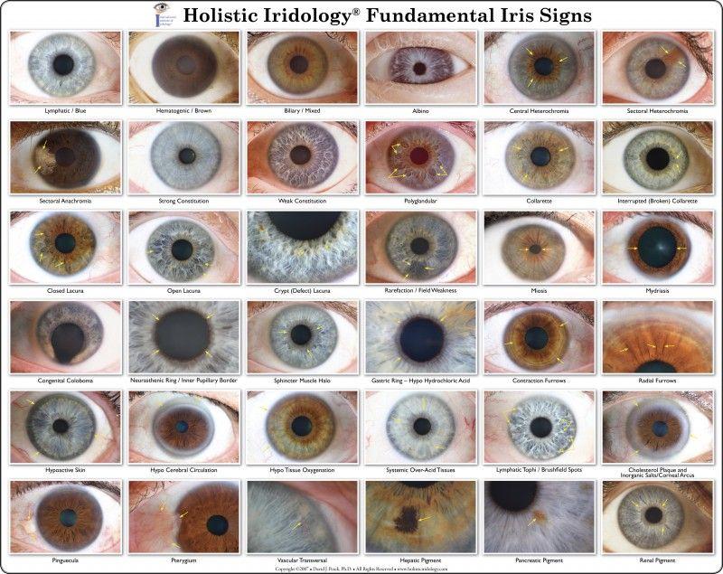 Iridology chart iris eye colors also elkaydee vashiane natural color  such  groovy rh pinterest