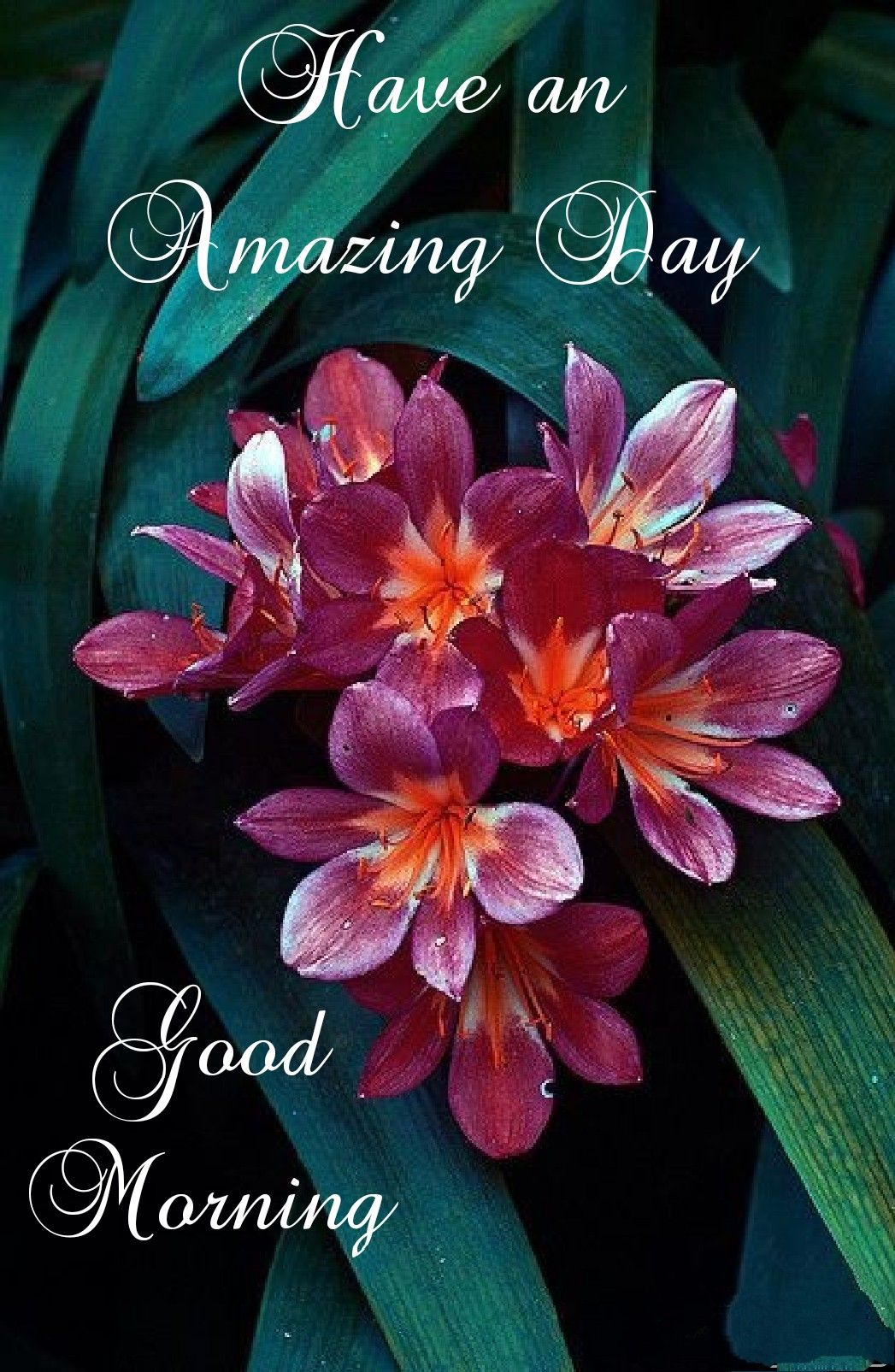 Pin By Harry Urban On Morning Wishes Good Morning Animation Good Morning Greeting Cards Good Morning Greetings