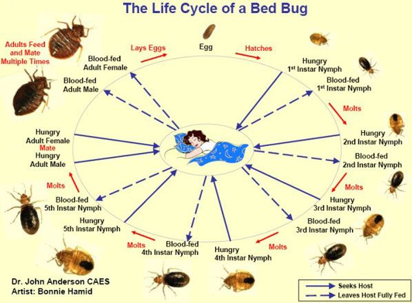Baby Bed Bugs My Favorite Website Rid Of Bed Bugs Bed Bugs