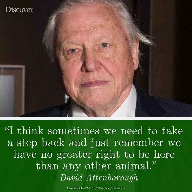 Accidental Vegan Quote David Attenborough Quotes Scientist Quote David Attenborough