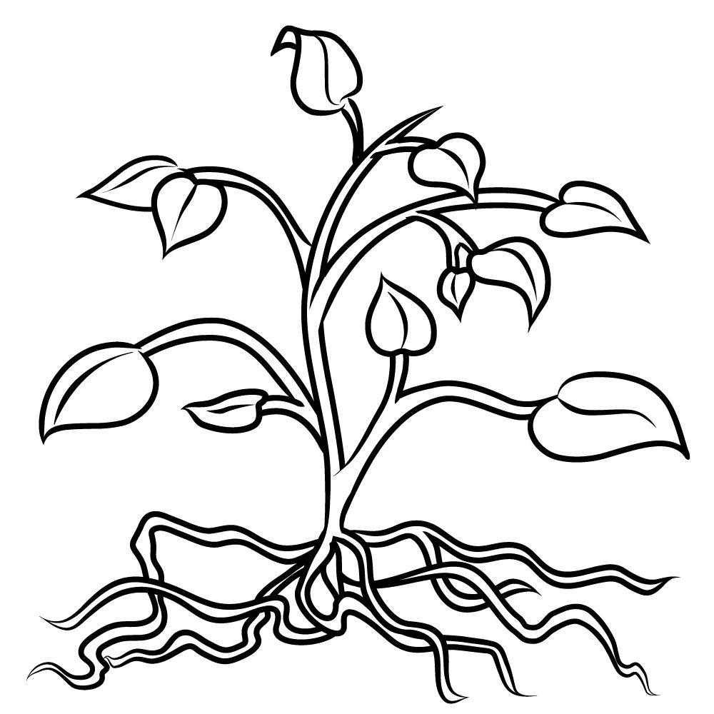 Plant With Roots Stencil Google Search Flower Coloring Pages Sunflower Coloring Pages Coloring Pages [ 1000 x 1000 Pixel ]
