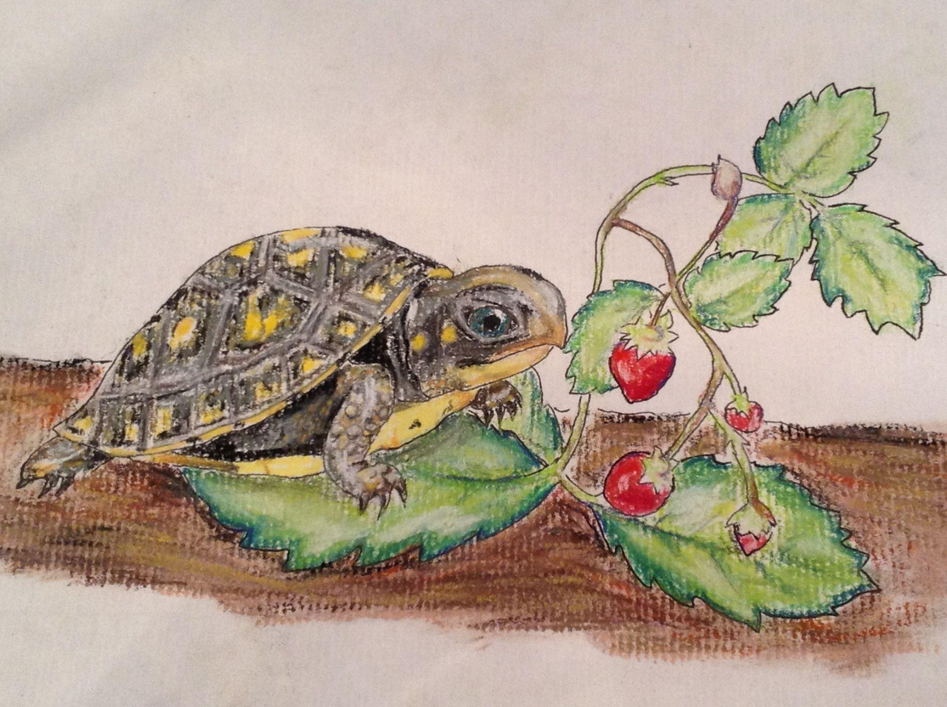 Turtles of wisconsin