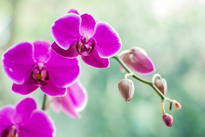 Orchid Meaning And Symbolism Orchid Meaning Birth Month Flowers Orchids