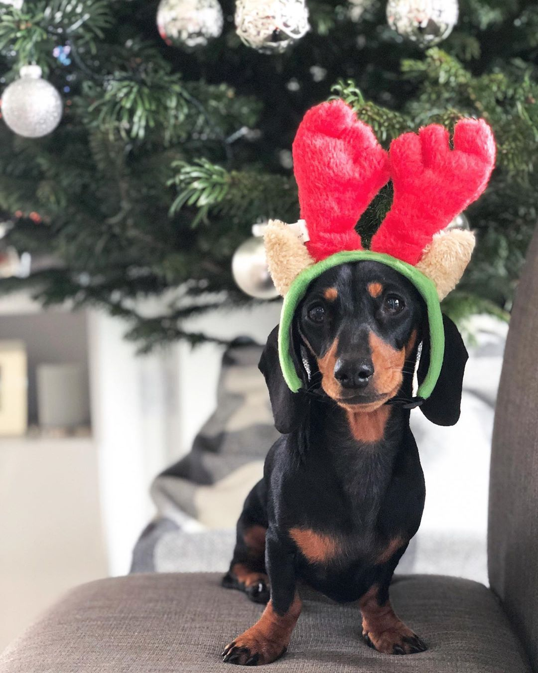 Christmas Sausage Dog Dachshund Christmas Dachshund Dachshund Lovers