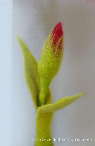 tulip1 | Flickr: Intercambio de fotos