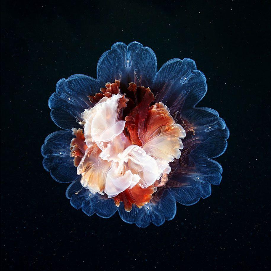 mesmerizing jellyfish photography by alexander semenov jellyfish