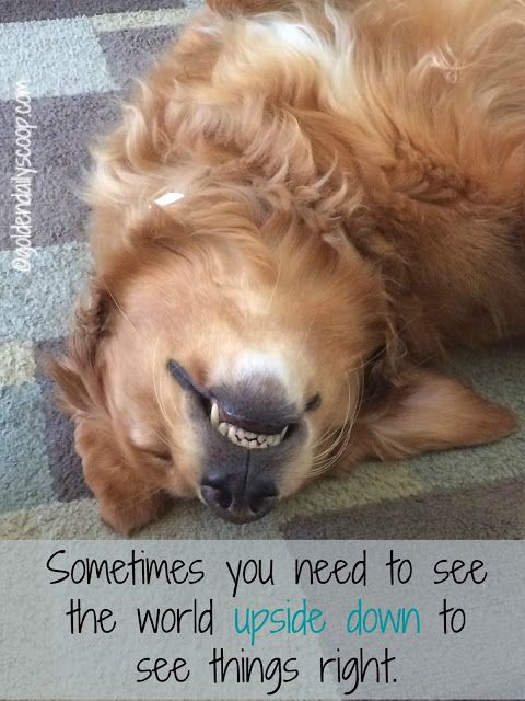 Turn That Frown Upside Down #wordlesswednesday