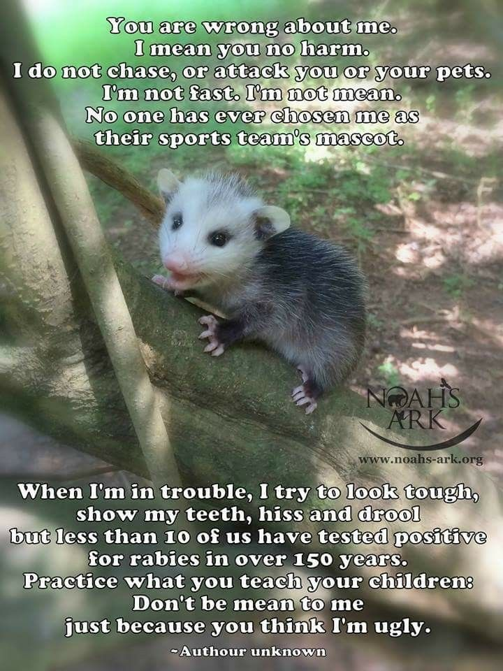 Fresh Garbage Memes For Trendy Possums