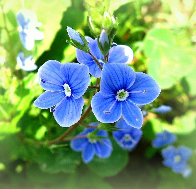 Поиск цветка по фото