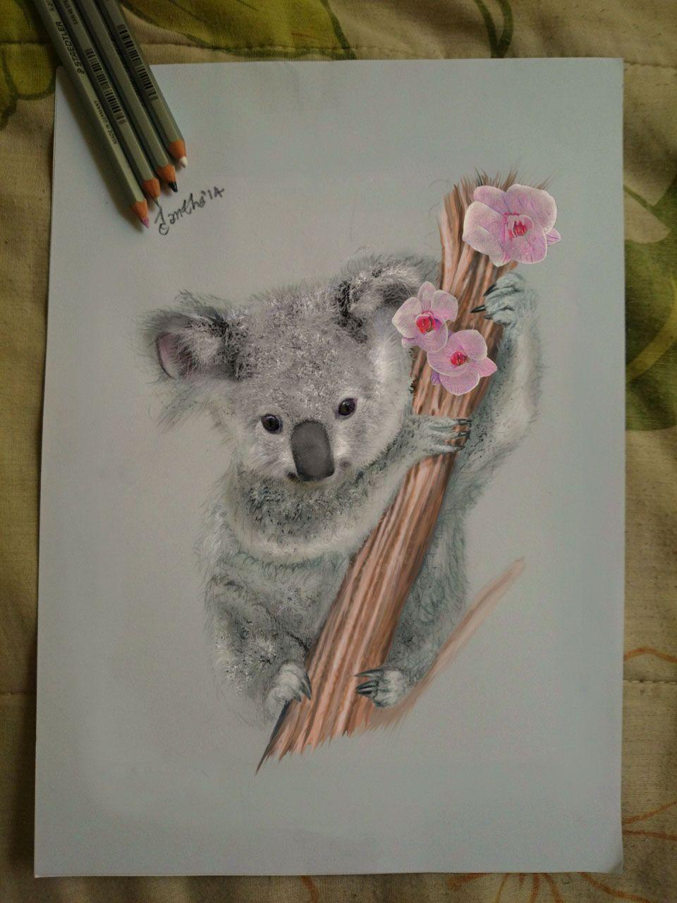 My Drawing A Koala Awww By Iangeliquein On Deviantart Drawings Dessin Koala Dessin Aquarelle Dessin Gar 231 On