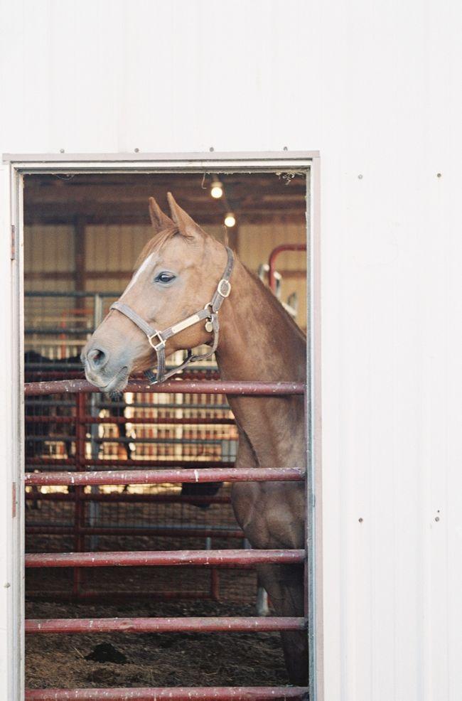Horse in Shelbyville, Kentucky - Allison Mannella Photography - North Carolina Fine Art Film Photographer