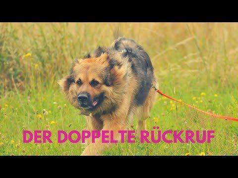 Ruckruf Bei Grosser Ablenkung Vitacanis Hunde Hunde Erziehen Gesunde Hunde