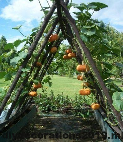 Einfache Gartenideen #ediblegarden