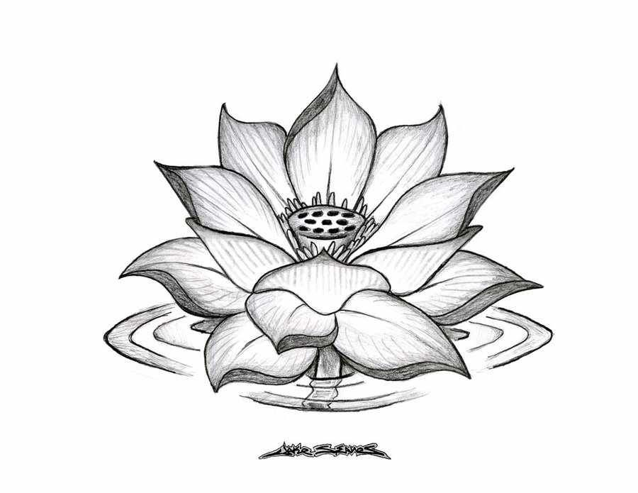 Pin by kristen kibbons on tattoos pinterest lotus lillies lotus mightylinksfo Choice Image