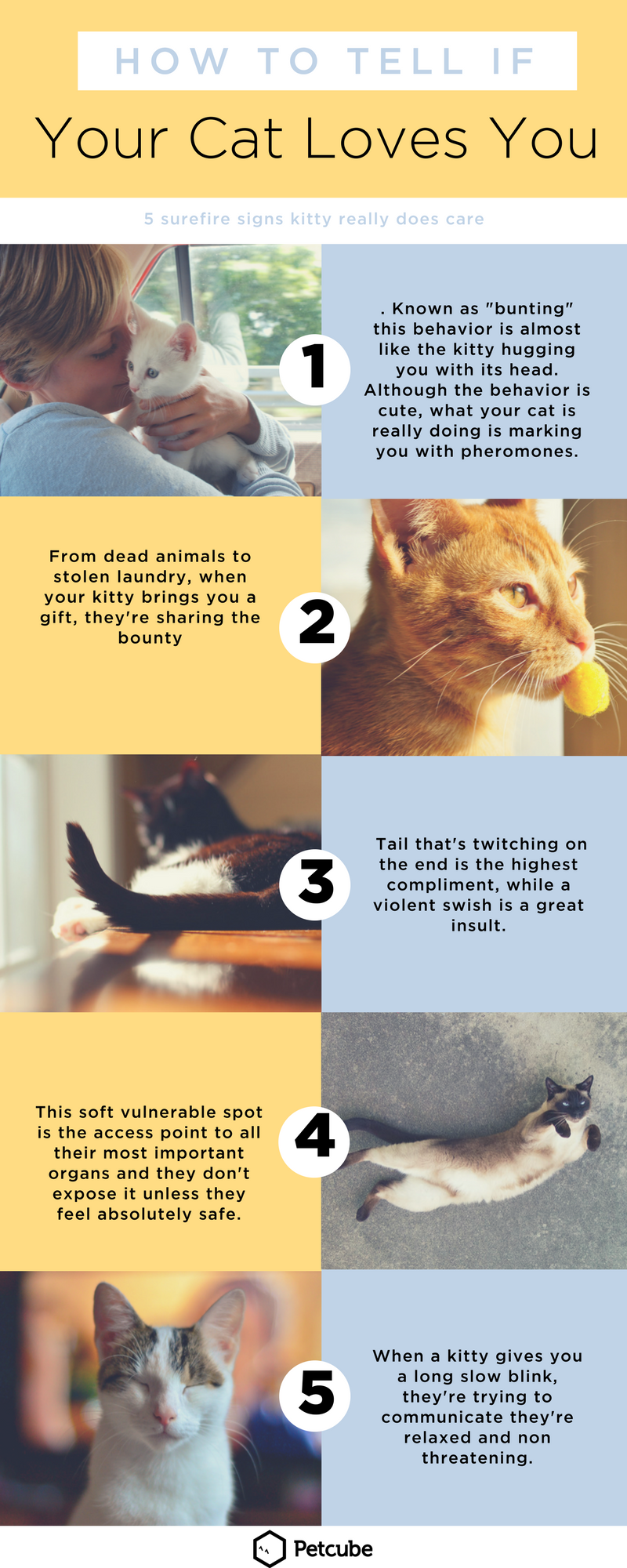 5 Signs Your Cat Really Does Love You Cat Love Cats That Dont Shed Cats