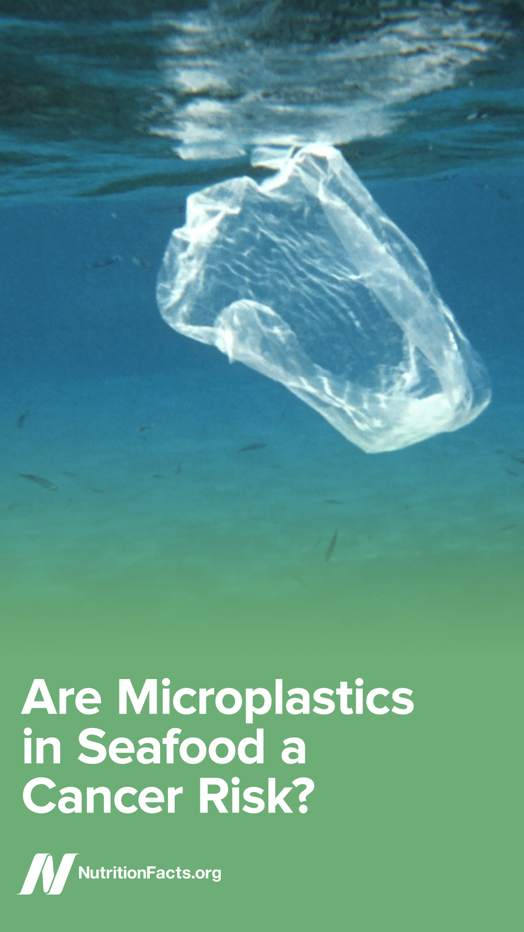 Plastic particles may exacerbate the pollutant contamination of fish