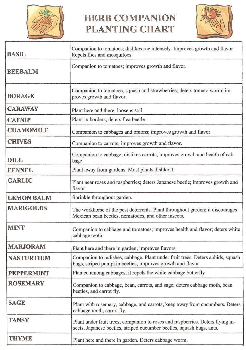 Herb Companion Planting Chart Herbal Gardens 15550890 By Fawn85w Via Slideshare