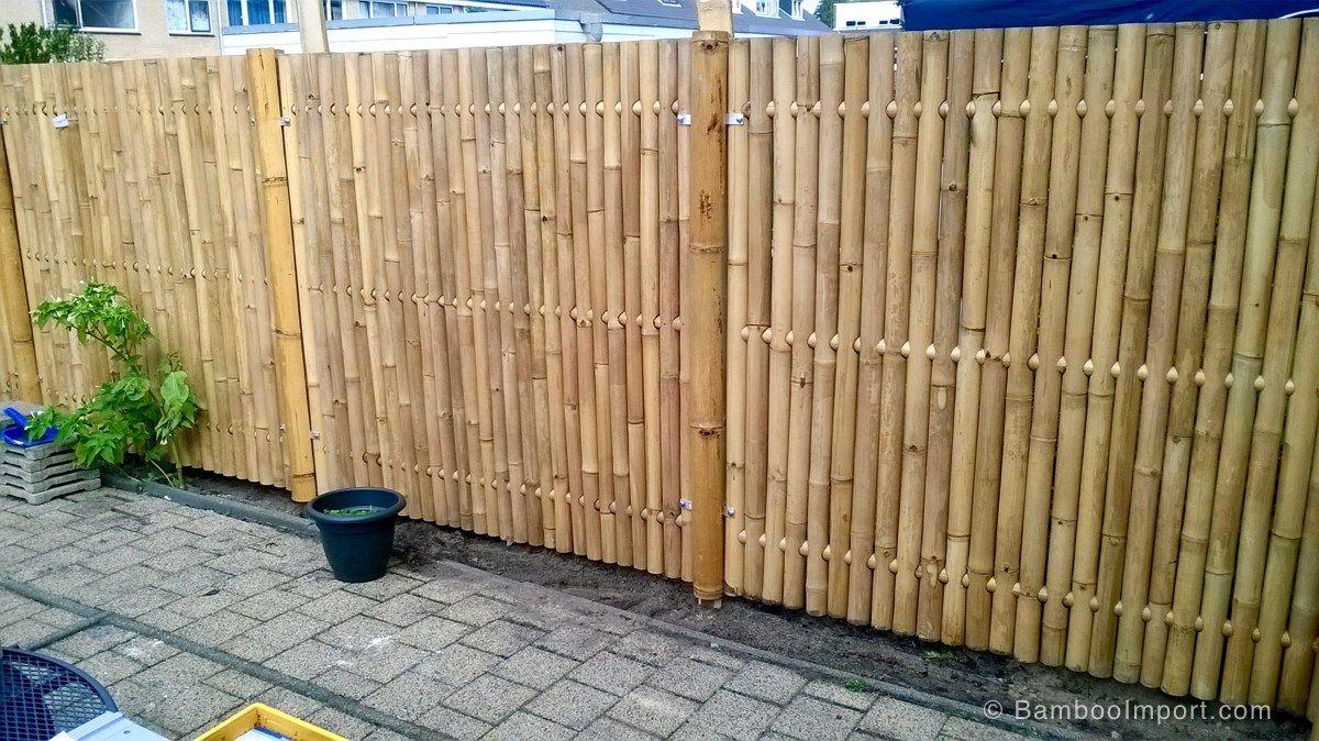 Giant Bamboe Tuinschermen