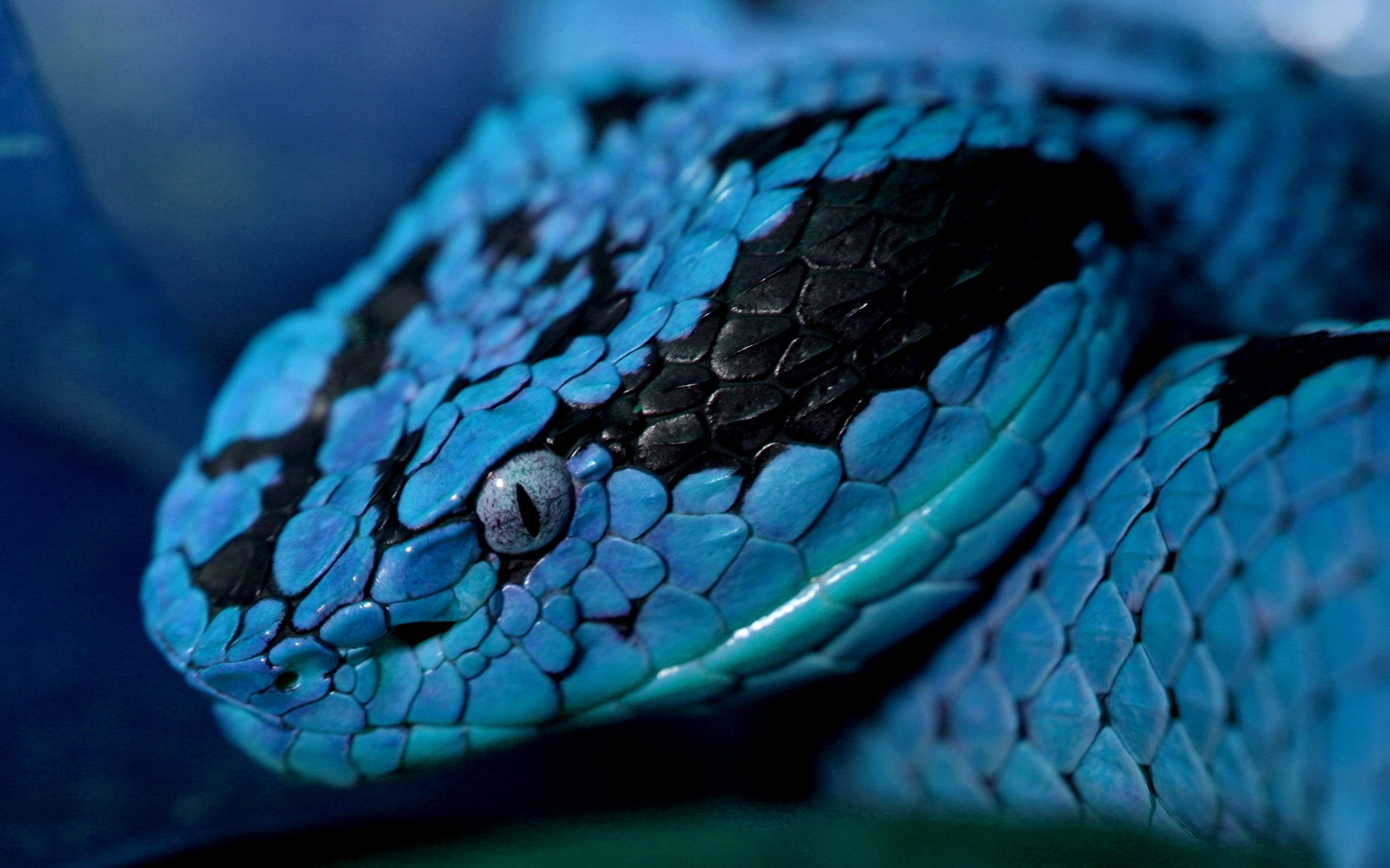 blue snake Is this Snake images, Colorful