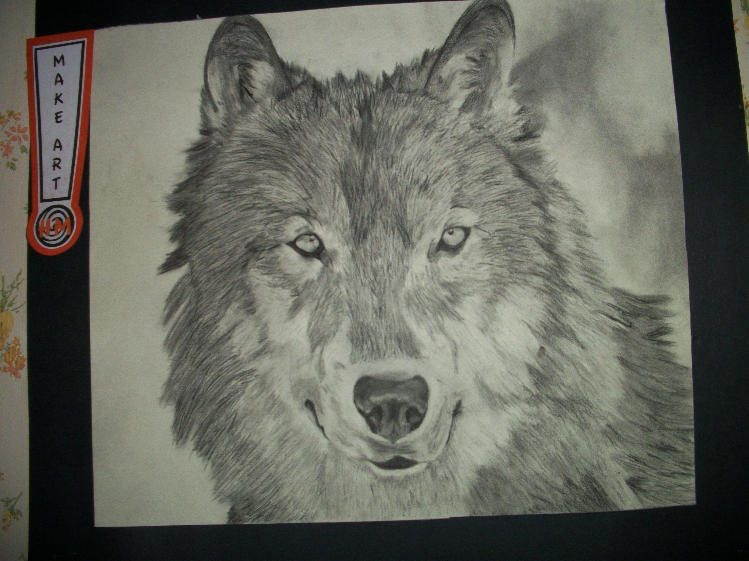 Charcoal drawing: wolf  -  #charcoal #charcoaldrawingwolf #drawing #Wolf