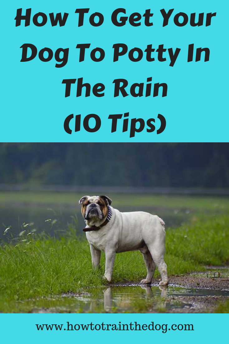 How To Get Your Dog To Potty In The Rain 10 Tips Dogs Dog Potty Training Potty Training Puppy