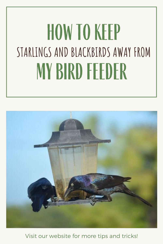 Pin On Bird Feeders