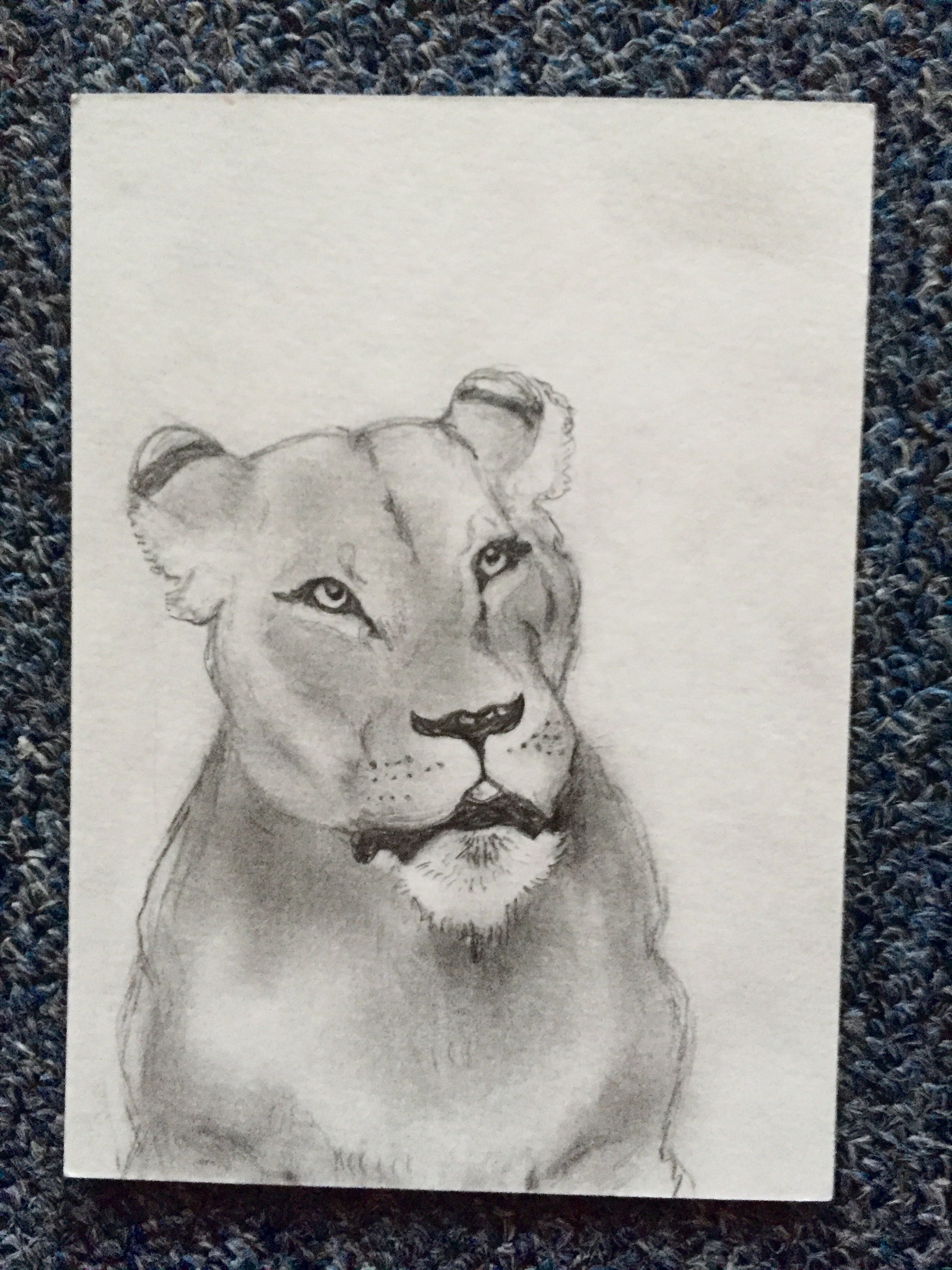 Drawing of a Lioness