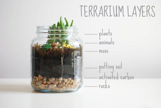 Little Peanut Terrarium Project Sweet Little Peanut