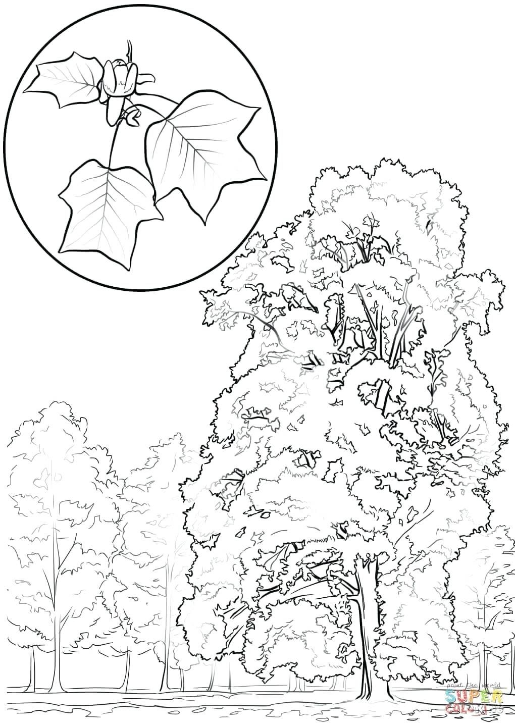 Coloring Pages Of A Tulip Tree Free