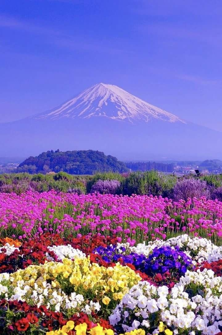 Flowers Mountain   Incredibly beautiful nature   Pinterest   Scenery     Flowers Mountain