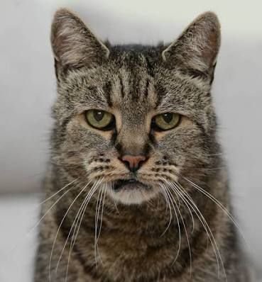 Oldest cat recorded