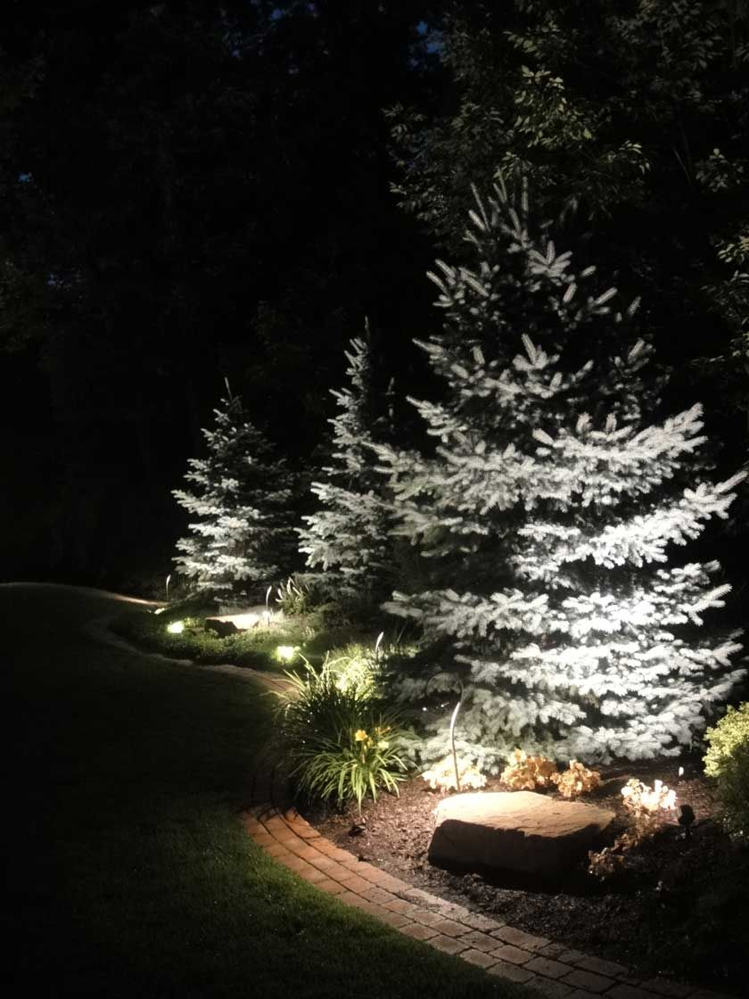Uplighting Evergreen Trees In 2019 Landscape
