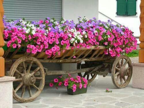 Uma carroça de flores. .