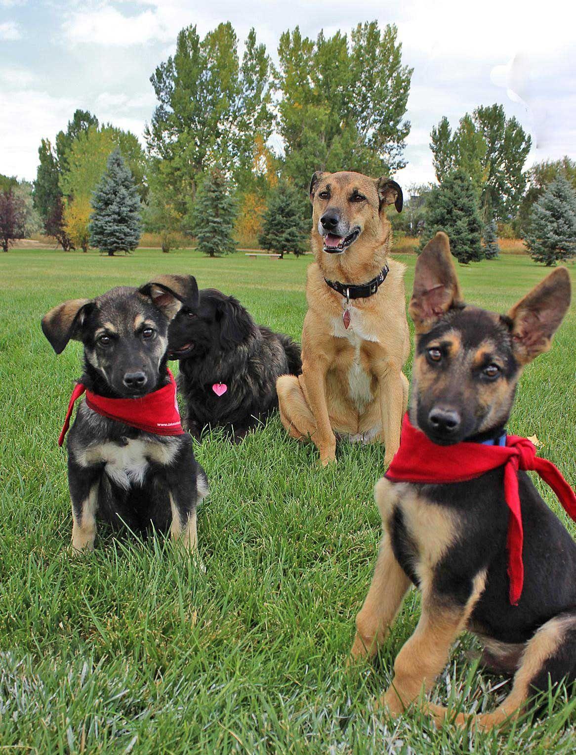 Lakota Animal Care Project Helps Dogs on Pine Ridge