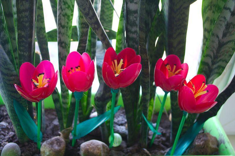 тюльпаны из пластиковых ложек,мастер класс,мк,своими руками,цветы из пластиковых ложек,цветы из пластика,для сада,обустройство приусадебного участка,весенние цветы,8 марта,идеи для дачи,поделки из одноразовой посуды,поделки из одноразовых ложек