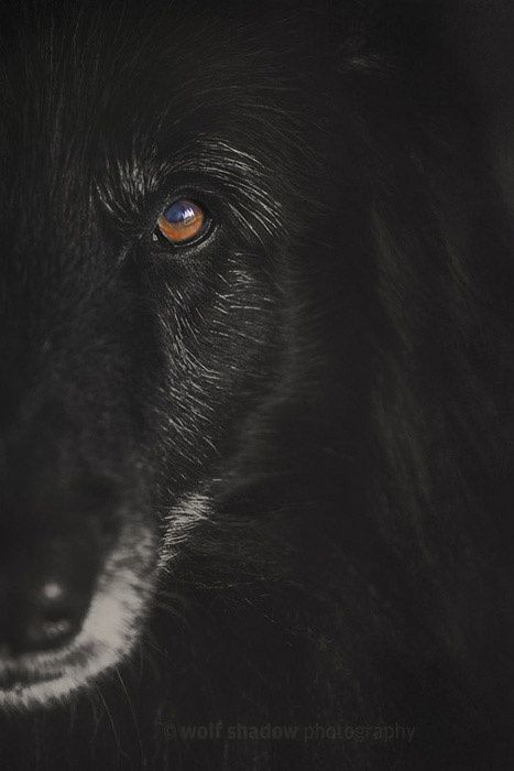 Half Face Portrait Of Wolfcub Wolfshadowphotography Black Wolf Animal Photography Shadow Photography