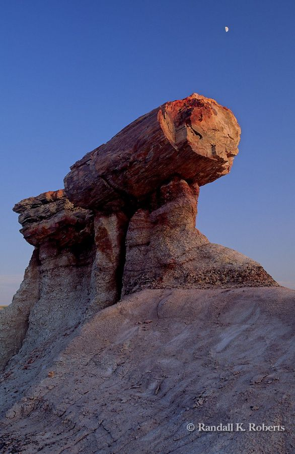 """A petrified redwood log sits perched on top of Blue Mesa in Petrified Forest National Park, Arizona; photo by Randall K. Roberts """"My parents visited the Petrified Forest several years and sent me a couple of pieces of polished petrified wood they bought a some gift shop.""""-Katrina Westall"""